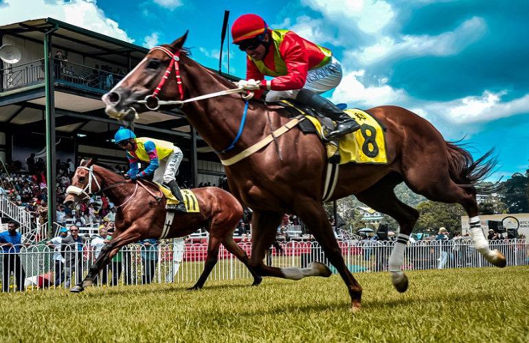 Rhinopneumonie-virus legt paardensport plat